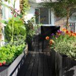 Twój wymarzony ogród na balkonie