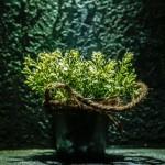 Rośliny ozdobne – nowa forma dekoracji cz.1
