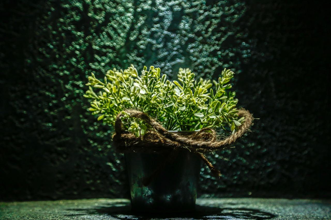 Rośliny Ozdobne Nowa Forma Dekoracji Cz 1 Blog