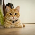 Dom z kotem, czyli czystość w obecności zwierząt