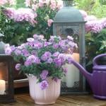 Letnie dekoracje w Twoim domu