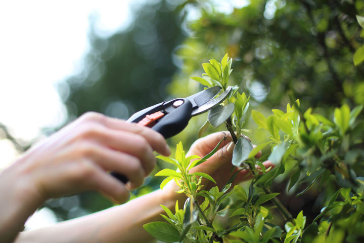 przycinanie gałęzi - prace w ogrodzie