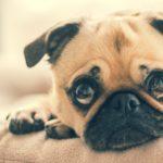 Jak przygotować dom dla psa?
