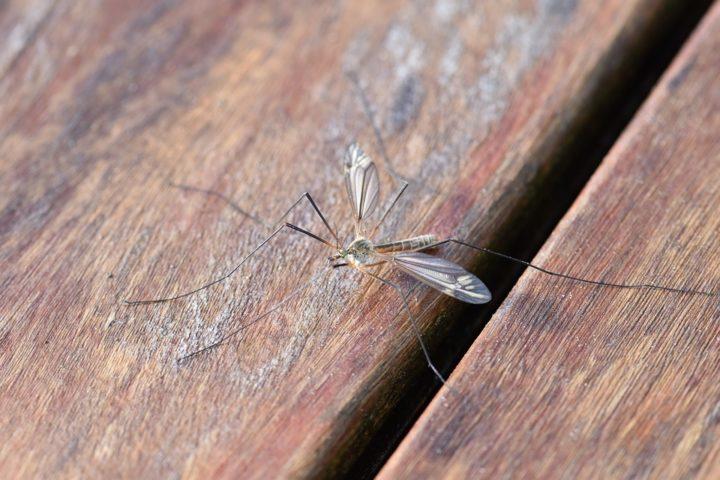 sposoby na komary w domu