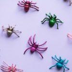 Dlaczego w domu są pająki